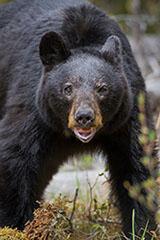 Blog_Bear3