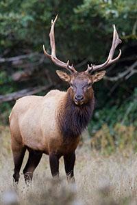membership_Elk